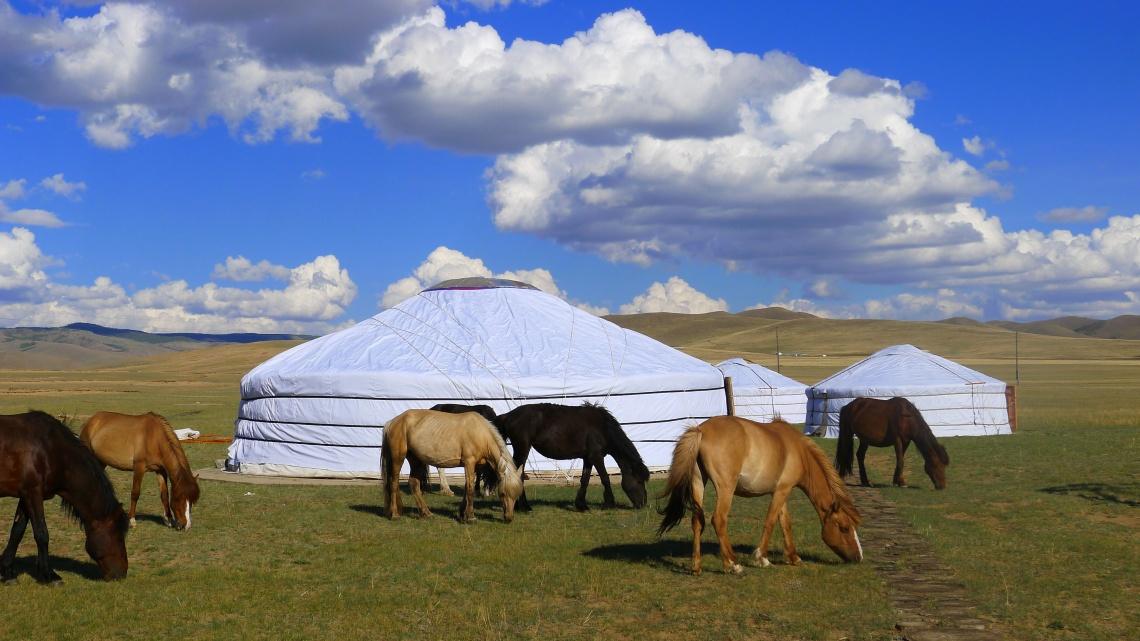 camp-horses_8133238473_o