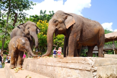 Elephant Nature Park, Thailand 2014